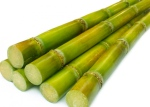 Interesting fact: Glycolic Acid is extracted from natural sugar cane!